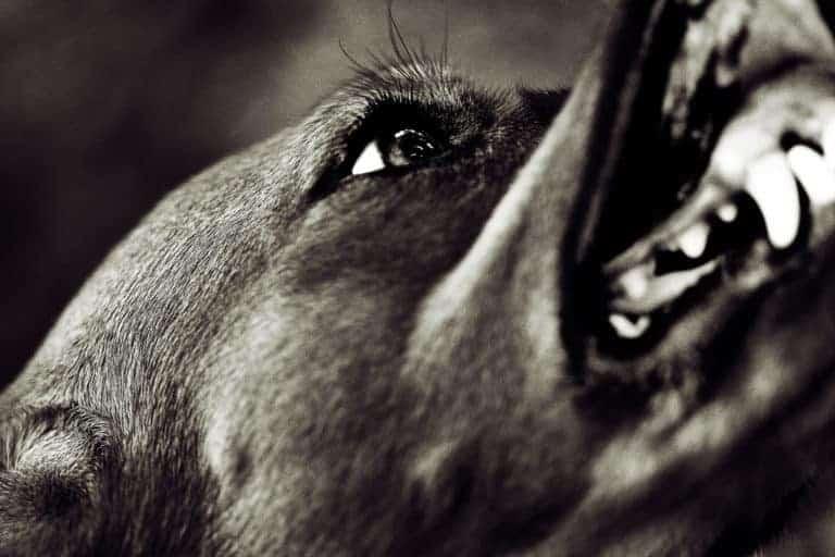The Pitfalls of Using Punishment in Dog Training