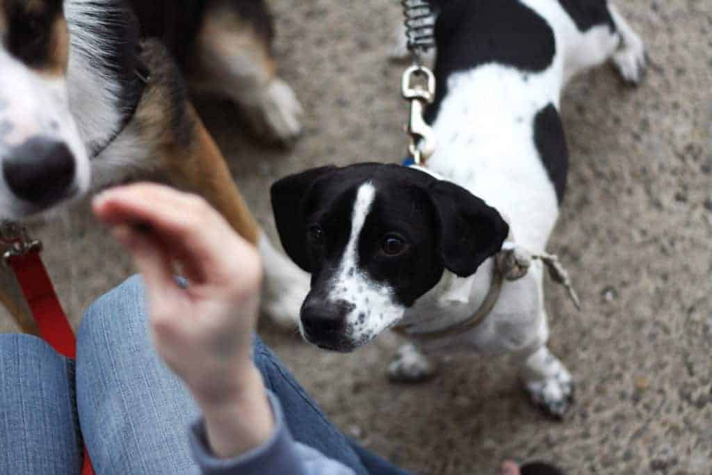 Five Common Dog Training Mistakes that People Make