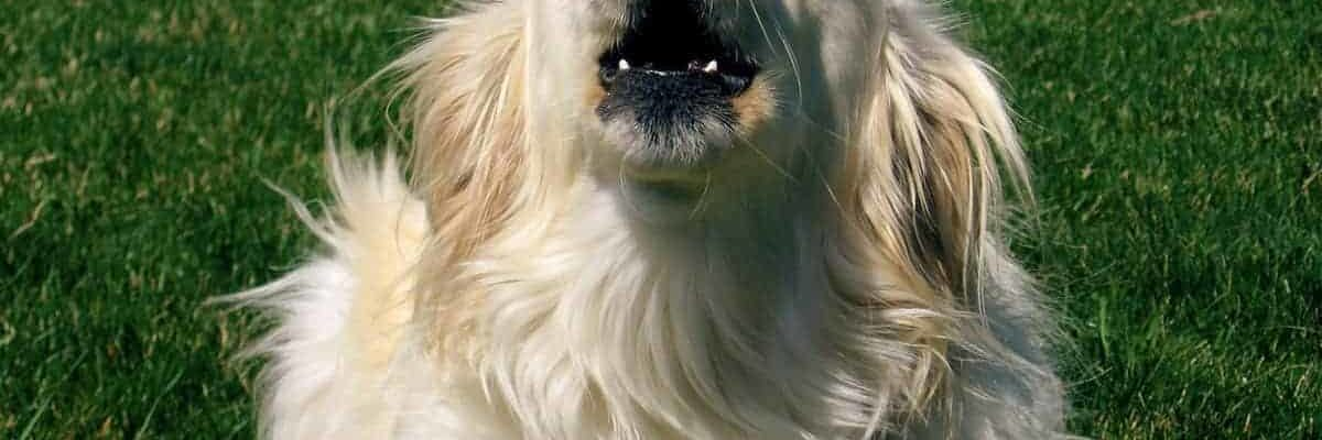 Dealing with Excessive Barking