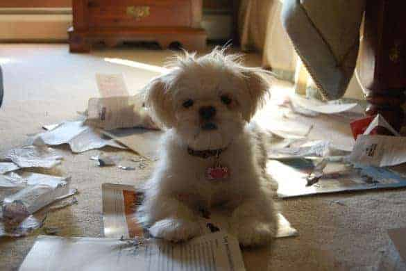 A cute puppy with his mess