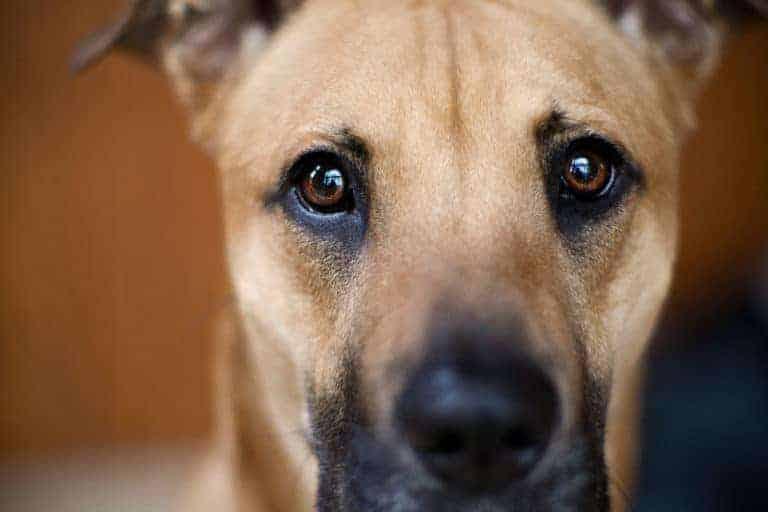Decoding Your Dog: The Eyes