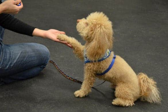 NYC Dog Trick Training Class