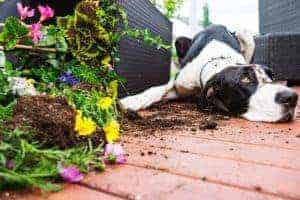 What to Expect from Your Adolescent Dog