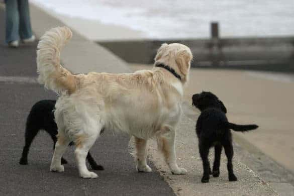 Dogs wagging their tails