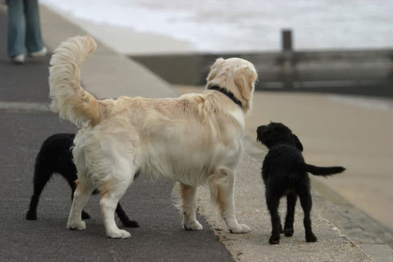 Decoding Your Dog: The Tail