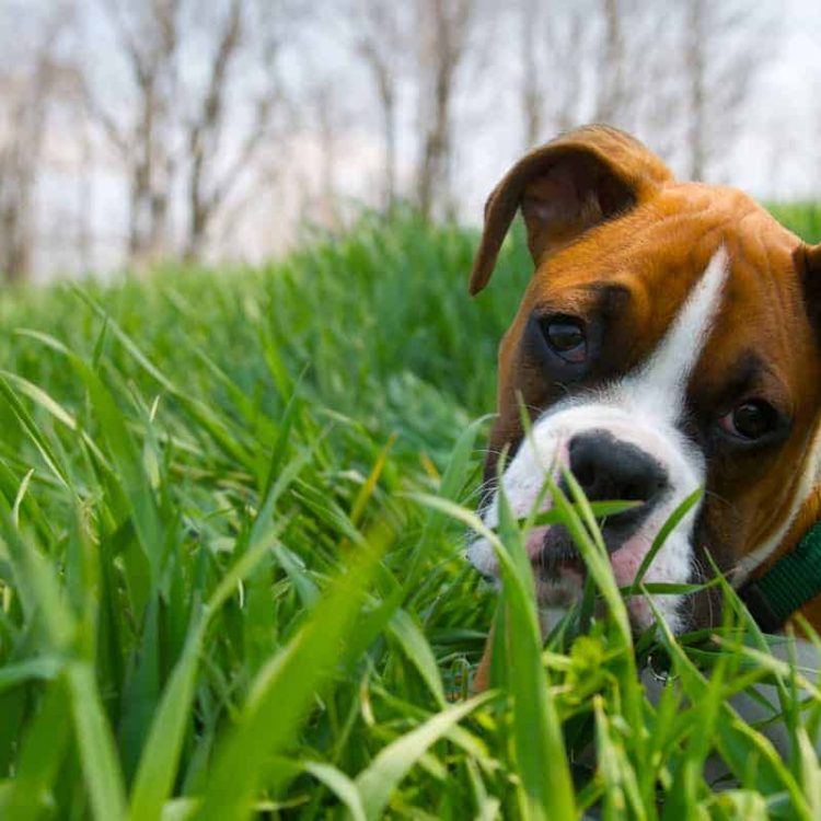 Making Your Dogs' Behaviour Work for You