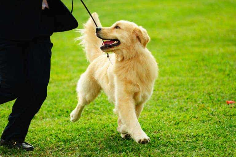 Puppy Training: The First 5 Things to Teach