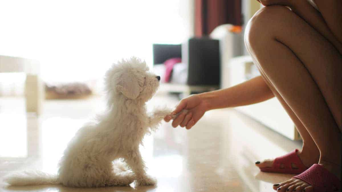 10 Easy Ways to Incorporate Dog Training into your Daily Routine