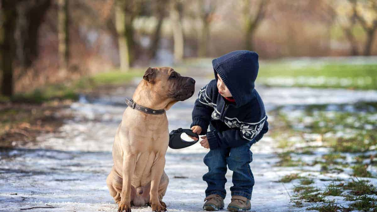 The Magic Words in Dog Training