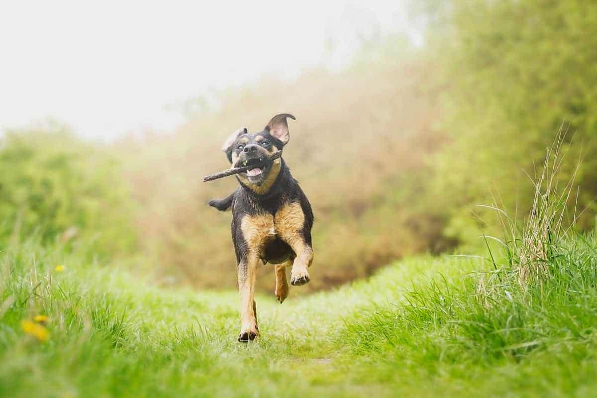 5 Ways to Improve Your Dog's Recall