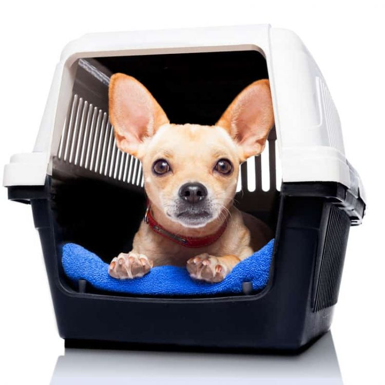 Teaching your Dog to Love his Crate