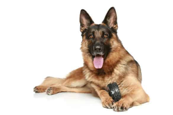 a black and tan German Shepherd Dog