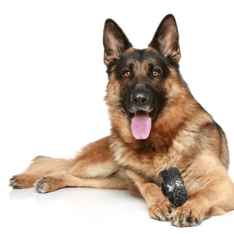 a black and tan German Shepherd Dog