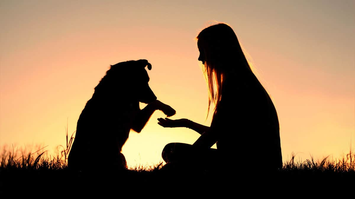 More than Being Pets: Animal Assisted Therapy