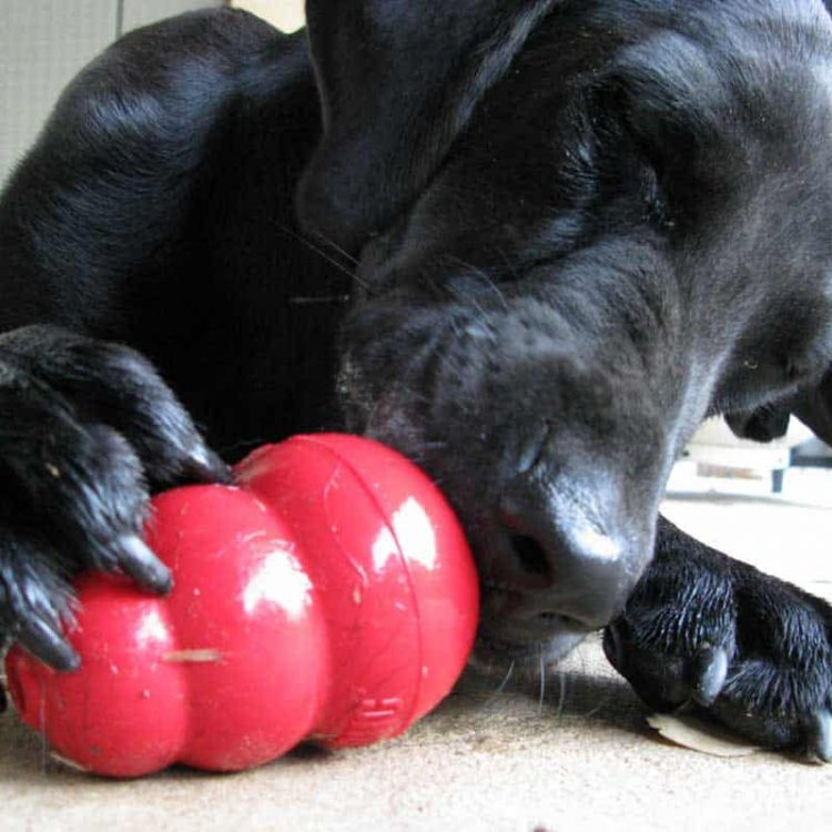 Interactive Toys for Dogs: Why we Need them