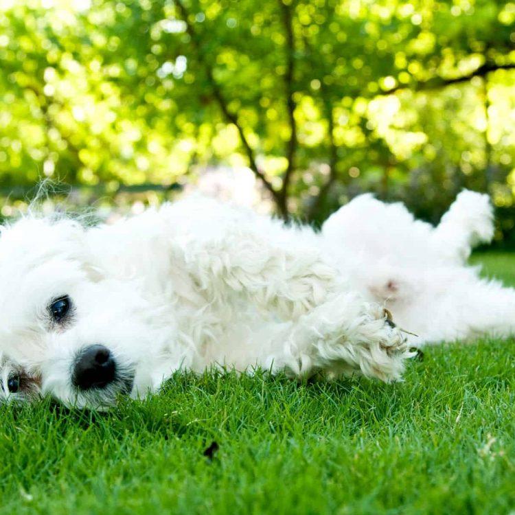 (Ab)normal Dog Behaviours