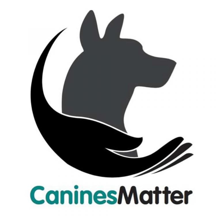 Canines Matter